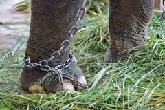 Elephant dung Stock Photos