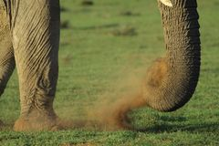 Elephant dust Royalty Free Stock Images
