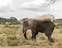 Elephant dust bathing, Serengeti, Tanzania Stock Image