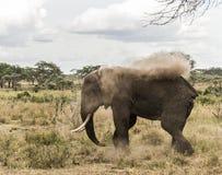 Elephant dust bathing, Serengeti, Tanzania Stock Image