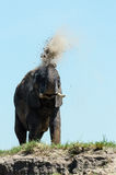 Elephant dustbath Royalty Free Stock Images