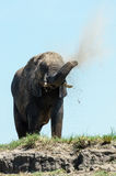 Elephant dustbath Royalty Free Stock Image