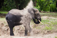 Elephant dusting Royalty Free Stock Image