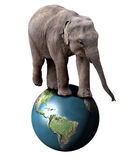 Elephant and Earth. A baby circus elephant balancing on the planet Earth Stock Photos