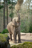 Elephant is eating hay Stock Images