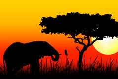 Elephant eating in sunset Stock Photography
