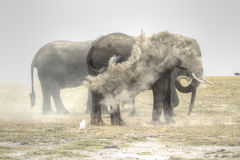Elephant Elefante Royalty Free Stock Image