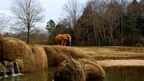 Elephant. At Ashboro, North Carolina zoo Royalty Free Stock Photography