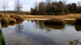 Elephant. Next to pond at Ashboro, North Carolina zoo Stock Photo