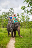 Elephant,Elephant ride,-Bangpa safari in a beautiful forest conv Royalty Free Stock Image
