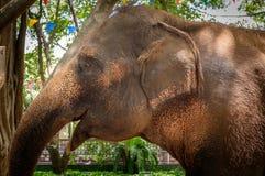 Elephant. An elephant at Sam Phran Zoo, Thailand Stock Images