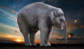 Elephant, Elephants And Mammoths, Indian Elephant, Mammal Stock Images