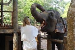 Elephant, Elephants And Mammoths, Indian Elephant, Mammal Stock Image