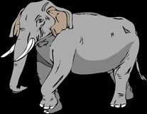 Elephant, Elephants And Mammoths, Indian Elephant, Mammal Stock Photos