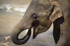 Elephant, Elephants And Mammoths, Terrestrial Animal, Indian Elephant Stock Photos