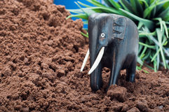 Elephant Emerges from the Jungle Stock Image