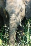 Elephant portrait up close showing detail of his skin. royalty free stock images