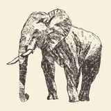 Elephant engraving illustration hand drawn sketch Stock Images