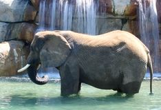 Elephant Enjoying Waterfall. In hot summer day stock images