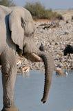 Elephant, Etosha National Park, Namibia stock photo