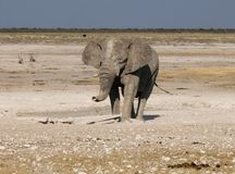 Elephant in Etosha Park 2 Stock Photo