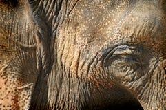 Elephant eye Stock Photography