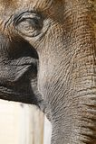 Elephant eye Stock Image