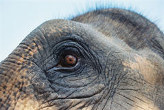 Elephant eye Stock Photo