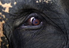Elephant eye close-up Royalty Free Stock Image