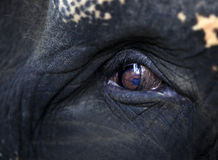 Elephant eye close-up Stock Photos