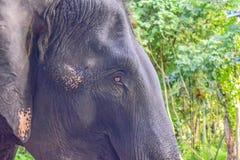 Elephant eye. Close up asia elephant eye in Sriracha Tiger zoo Royalty Free Stock Photography