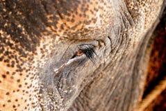 Elephant eye. Close-up on elephant eye, Thailand Royalty Free Stock Images