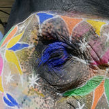 Elephant eye makeup for ceremony. Royalty Free Stock Images