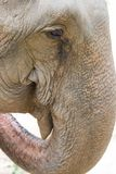 Elephant eye. The picture of zooming into the eye of elephant Royalty Free Stock Image