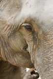 Elephant eye. The picture of zooming into the eye of elephant Royalty Free Stock Photography