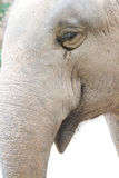 Elephant eye. The picture of zooming into the eye of elephant Royalty Free Stock Images
