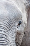 Elephant eye. Up close photo of an elephant in Amboseli national park in Kenya Royalty Free Stock Photography