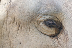 Elephant eye. The zoom-in picture of elephant eye royalty free stock photography