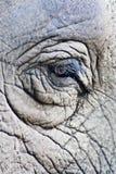 Elephant eyes. Close-up of the elephant eye and rough skin Royalty Free Stock Photo