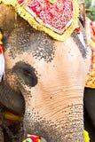 Elephant face close up Stock Photo