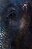 Elephant face drama. On eye Stock Photo