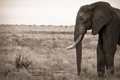 Elephant facing small bird Stock Photos