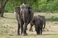 An elephant family Stock Photography