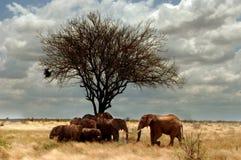 Elephant Family Stock Image
