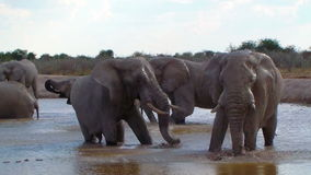 Elephant family bathing action in a waterhole Africa