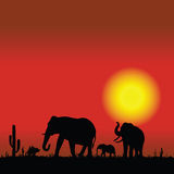 Elephant family in desert black silhouette Stock Photography