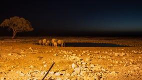 Elephant family. Elephant drinking at Okaukuejo waterhole, Etosha National Park, Namibia Stock Image