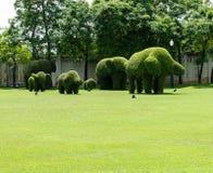 Elephant family dwarf Royalty Free Stock Photo