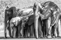Elephant family Royalty Free Stock Photos