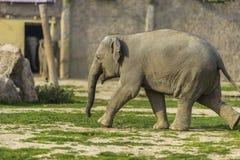 Elephant Family Stock Photos